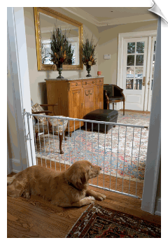 Duragate Pet Gate by Cardinal