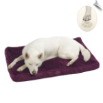 Plush Ortho Bliss Memory Foam Bed