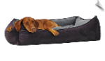 Scoop Dog Bed